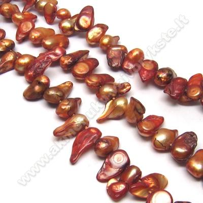 Upinių perlų juosta kavos spalvos